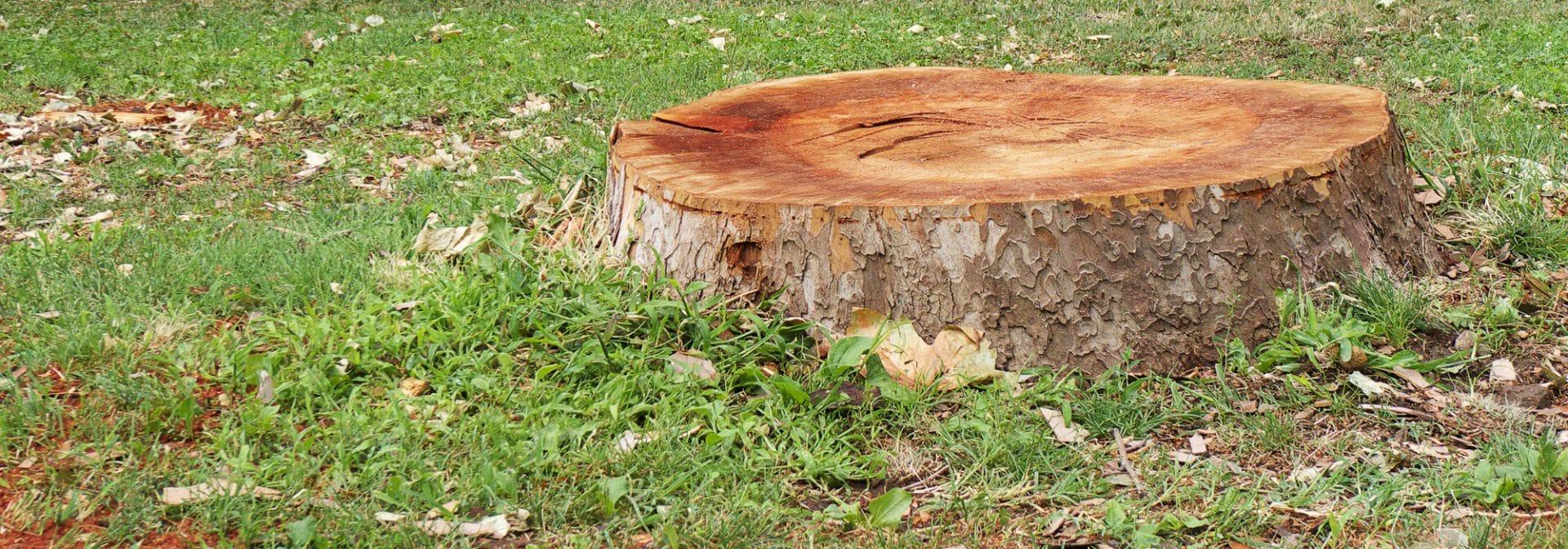 Souche d'arbre dans un parc